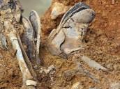 Los huesos que defendieron la democracia